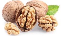 Орех грецкий (в агрономической сетке) Региа (плоды — крупные односемянные костянки, созревают в сентебре- октябре)