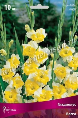 Гладиолус крупноцветковый Багги