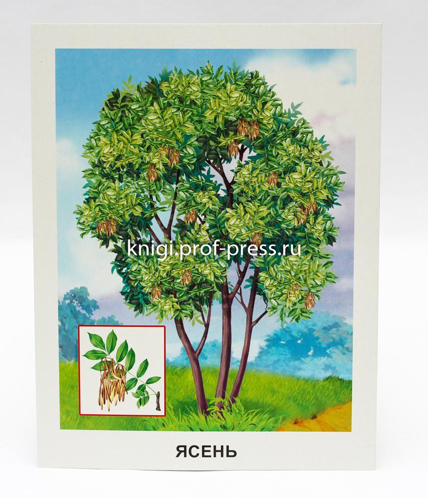 последующие картинки с деревьями для доу качестве фонового