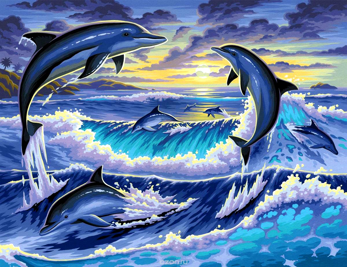 Фото и рисунки дельфинов