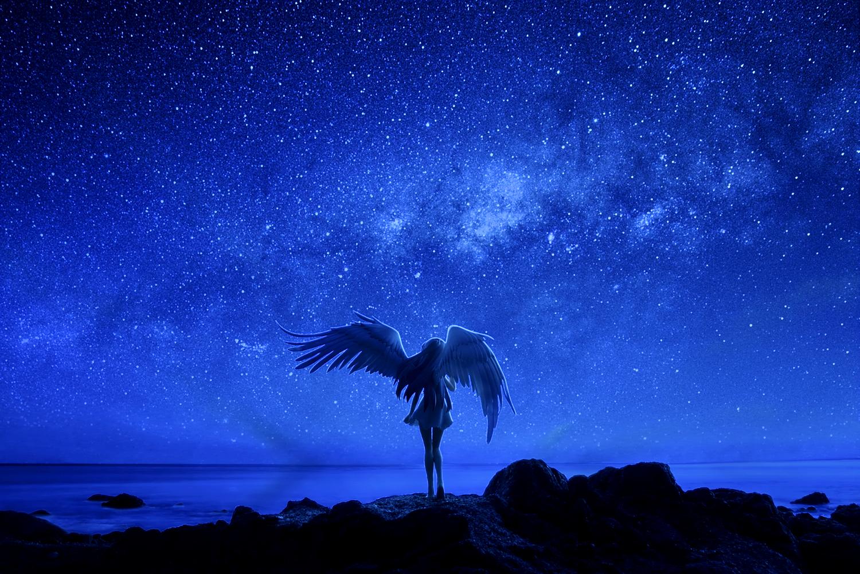 крылья ночи картинки кабинет