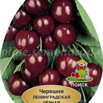 Черешня Ленинградская черная (средний, черно-вишневый)