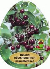 Вишня Владимирская (средний, черно-красный)