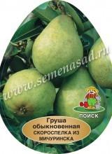 Груша Скороспелка из Мичуринска (раннелетний, желто-зел. с роз. румянцем)