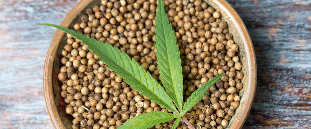 Как лечить семенами конопли производство марихуаны статья