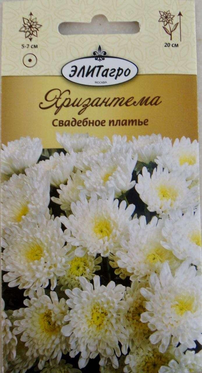 Хризантемы Платье Невесты Посадка