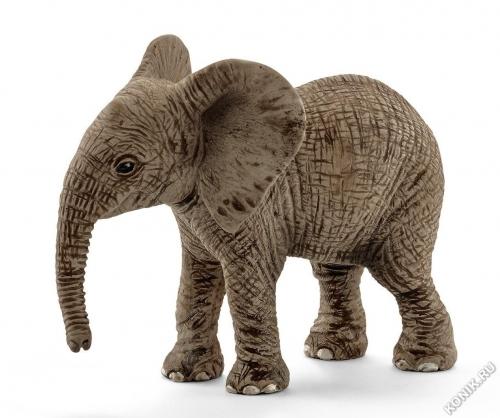 Детеныш Африканского слона
