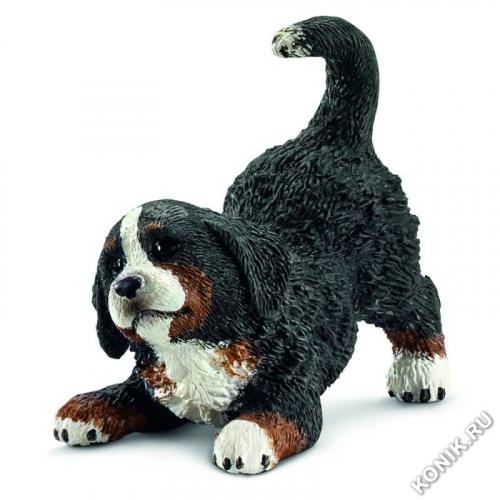 Бернский Зенненхунд, щенок