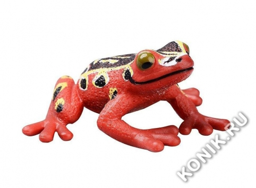 Африканская лягушка