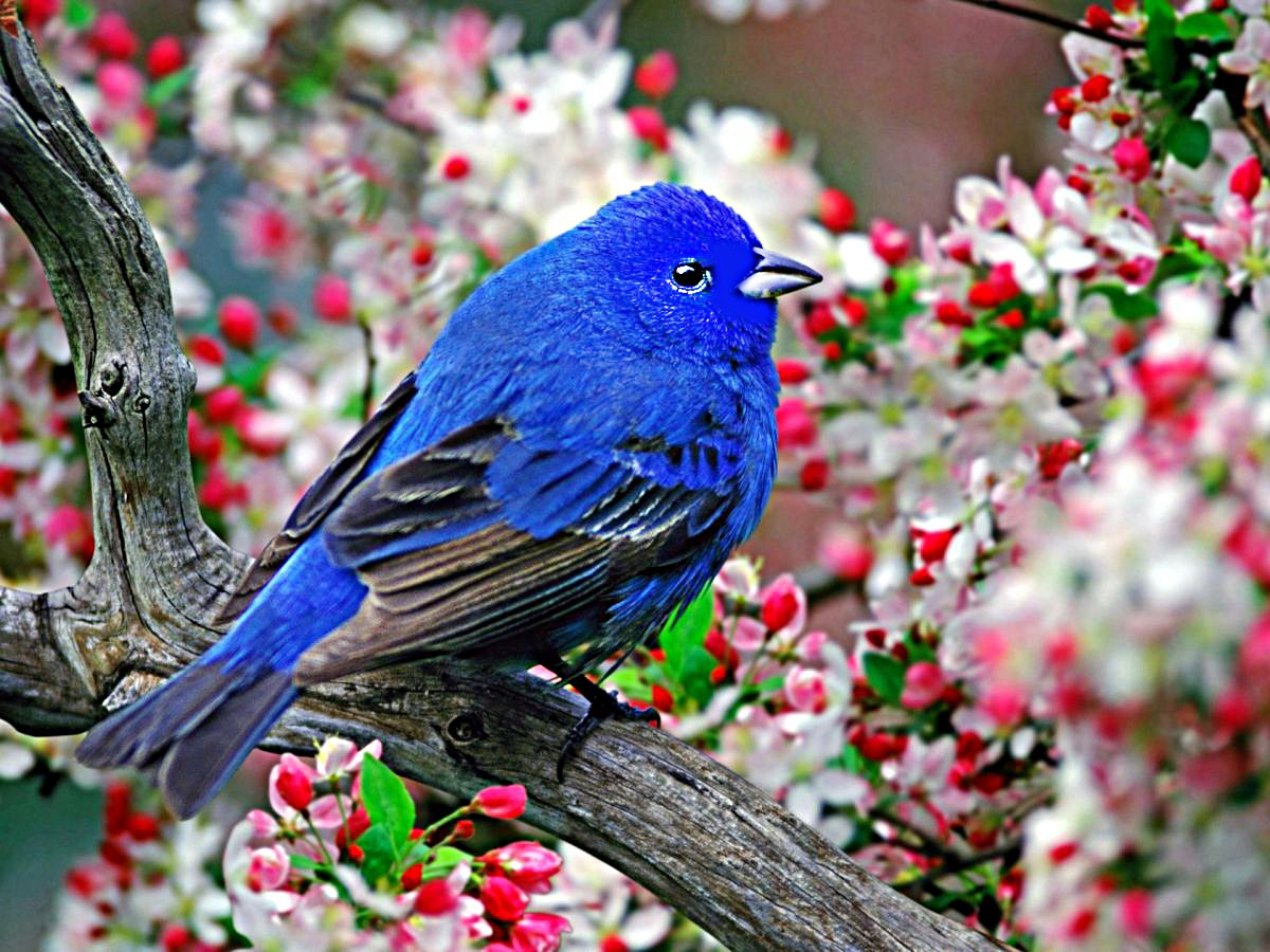 Птички на картинках, папе новый