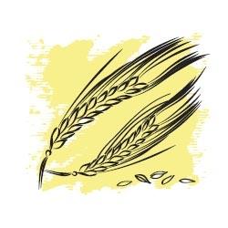 Пшеничных зародышей масло