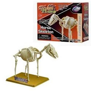 Наглядное пособие Скелет лошади 28204