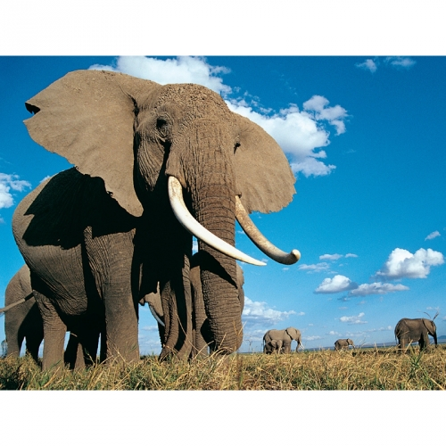 Большой напольный пазл-головоломка Слон 16461